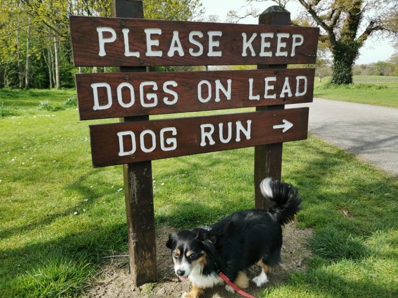 Corkagh Dog Park Run