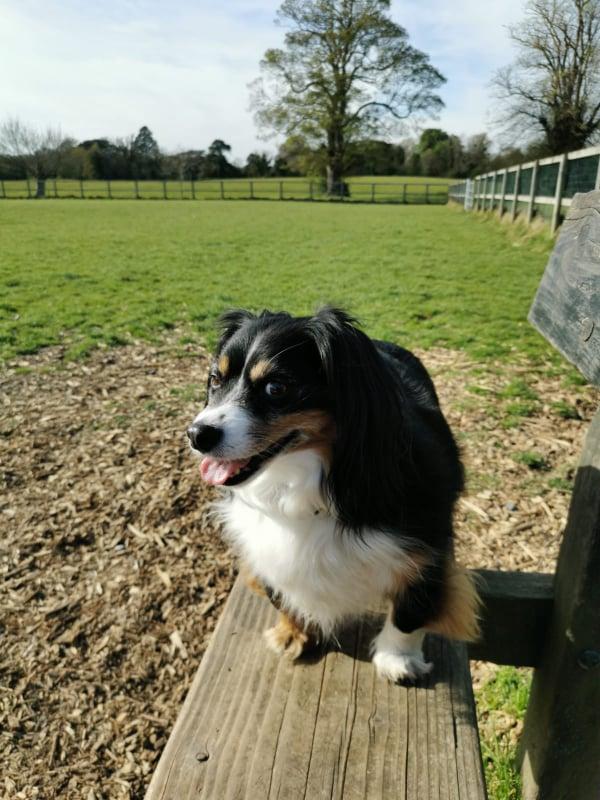 Corkagh Dog Park
