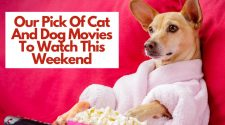Movies cats and dogs