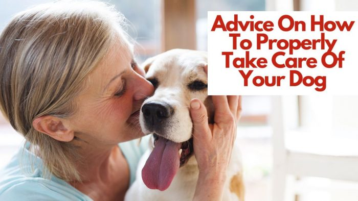 Advice On How To Properly Take Care Of Your Dog