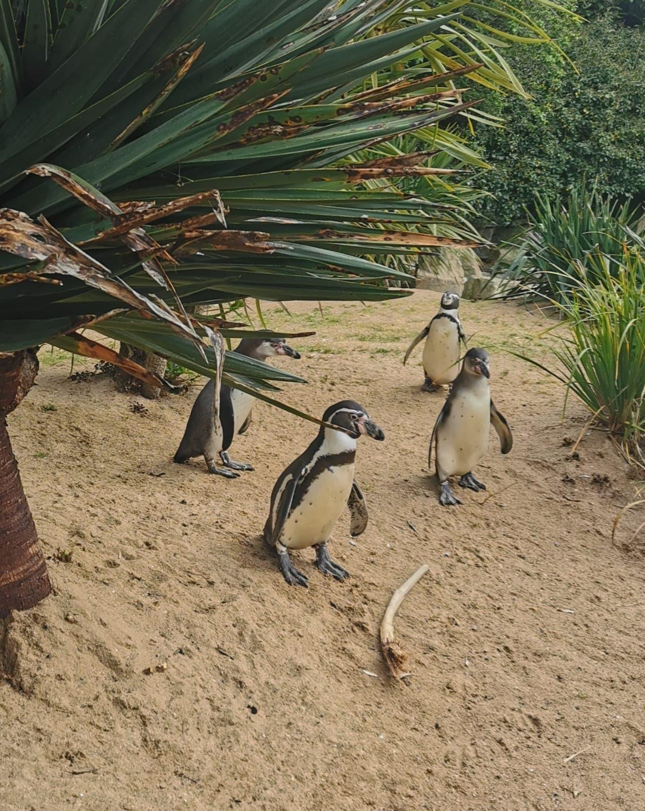 Dublin Zoo Penguin