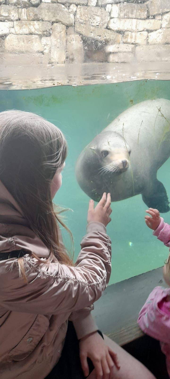 Dublin Zoo Sea Lion
