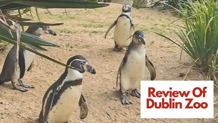Review of Dublin Zoo