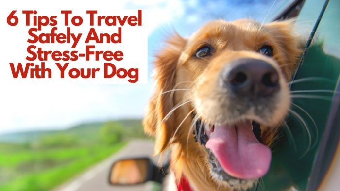 6 Tips To Travel Safely And Stress-Free With Your Dog