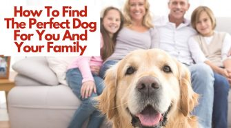 How To Find The Perfect Dog For You And Your Family