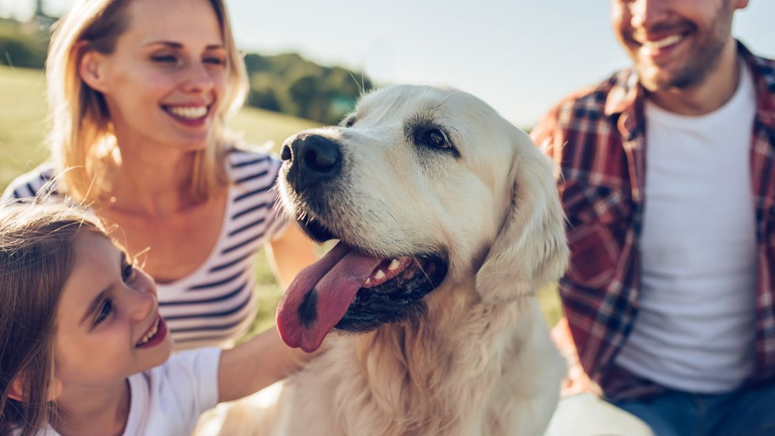 Perfect Dog For Family