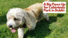 A Big Paws Up for Cabinteely Park in Dublin