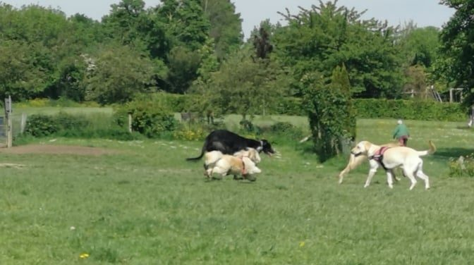 Cabinteely Park Dog Park