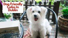 Dog Friendly Cafes In Dublin